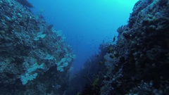 Divers swim underwater between beautiful coral reef. Scubadiving. Animals Stock Footage