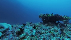 Diver swim underwater touch tropical coral reef. Scubadiving. Sealife. Animals Stock Footage