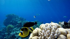 Tropical coral reefs. Underwater life in the ocean. Colorful corals and fish. Stock Footage