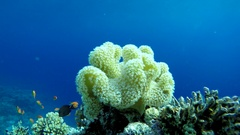 Coral reef. Natural environmental conditions. Coral reef and beautiful fish. Stock Footage