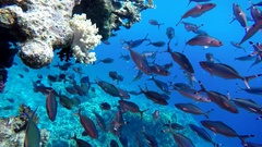 Colourful fish Tropical coral reef. Stock Footage