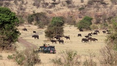 Game drive Stock Footage
