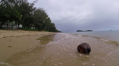 A coconut on the beach washed away by the ocean Stock Footage