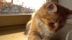 Close up of a funny young cat lying at the windsill. Kitten sleeps Stock Footage