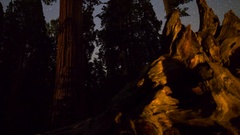 MoCo Astro Timelapse Tracking Shot of Stars over Grant Grove in Sequoia -Tilt Up Stock Footage