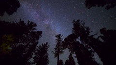 Astro Timelapse Low Angle Shot of Starry Sky thru Giant Sequoia -Tilt Down- Stock Footage