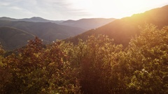 Beautiful Footage Of Trees During Sunrise Forest Branch Drone Scenic Environment Stock Footage