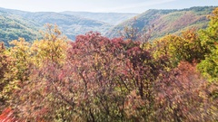 Scenic View Of Autumn Trees And Mountains On Sunny Day Season Forest 4K Aerial Stock Footage