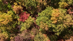 Panoramic Shot Of Colorful Forest During Autumn Season Nature Tree Mountain Stock Footage