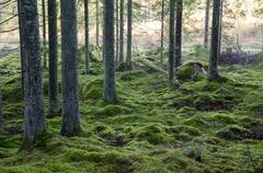 Mossy green forest Stock Photos