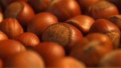 Hazelnuts. Vertical pan. Close-up. Stock Footage