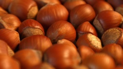 Hazelnuts. Horizontal pan. Close-up. Stock Footage