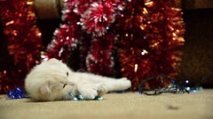 Beige kitten playing with Christmas tinsel Stock Footage