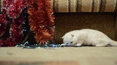 Beige kitten playing with Christmas lights and tinsel Stock Footage