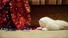 Beige kitten lies about Christmas lights and tinsel Stock Footage