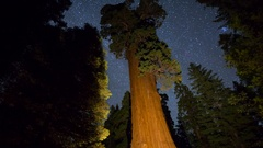 MoCo Astro Timelapse Tracking Shot of General Grant Tree in Sequoia -Zoom In- Stock Footage