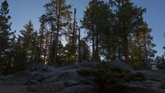 MoCo Timelapse Tracking Shot of Sunrise through Alpine Forest -Zoom Out- Stock Footage