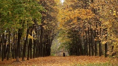 Russia, Moscow region, country autumn park. Autumn 2016 Stock Footage