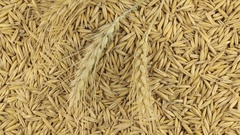 Rotation of the spikelets of wheat lying on the oats grains Stock Footage