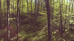 Scenery Of Beautiful Forest In Europe Branch Nature Landscape Drone Wilderness Stock Footage