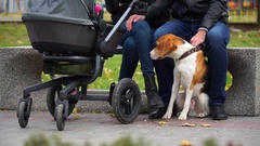 Faithful dog guards the peace of the owners Stock Footage