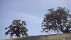 Driving past oak trees in San Francisco Northern California Stock Footage