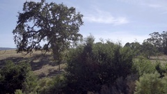 Driving past beautiful oak tree and shrubs in rural part of San Francisco Stock Footage