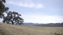 Pretty oak tree on sunny day with blue sky in San Francisco in Northern CA Stock Footage