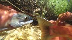 Salmon spawn upstream Stock Footage