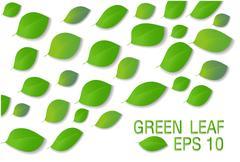 A green leaf Stock Illustration
