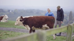 4K Farmer with vet out in the field checking on cattle herd Stock Footage