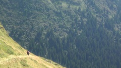 Hikers exploring the mountains Stock Footage