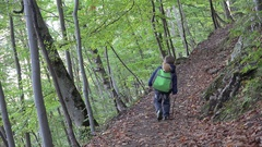 Little child with teddy bear in backpack hiking alone in the wood Stock Footage