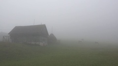 Cows herd grazing close house in the fog, autumn farmland Stock Footage