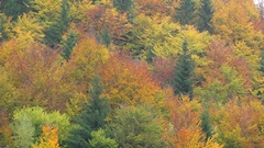 Colored trees, autumn forest up view, magical nature Stock Footage