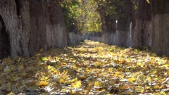 Colored autumn alley, golden leaves, fallen leaves Stock Footage