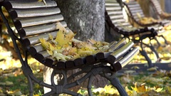 Golden autumn leaves fallen down on empty bench in the park Stock Footage