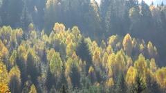 Sun shinning over yellow autumn forest Stock Footage