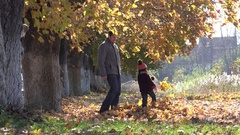 Father and son fighting with autumn leaves, golden foliage, sunny day  Stock Footage