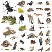 European wildlife in studio Stock Photos