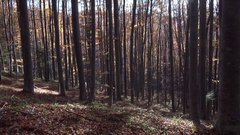 Looking up to the sky in autumn forest, height trees, sun rays shinning Stock Footage