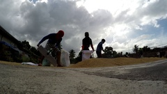 Rice mill workers sacking dried rice grains Stock Footage
