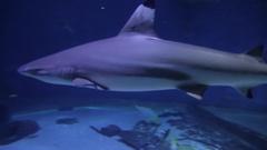 Sea Life Melbourne Aquarium, Melbourne, Victoria, Australia Stock Footage