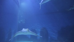 Sea Life Melbourne Aquarium, Melbourne, Victoria, Australia Stock Footage