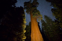 5K MoCo Astro Timelapse Tracking Shot of General Grant Tree in Sequoia  Stock Footage