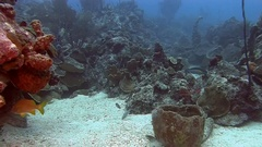 Swimming across the reef in Caribbean sea Stock Footage