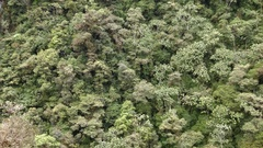 View over the canopy of tropical rainforest on the side of a valley. Stock Footage
