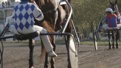 Harness horses walk on a track on a stadium after a race (slow motion) Stock Footage