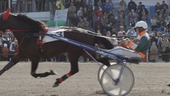 Harness horses fast trot in front of people on a stadium - side view Stock Footage