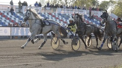 Many harness horses with a jockeys fast trot to the finish (slow motion) Stock Footage